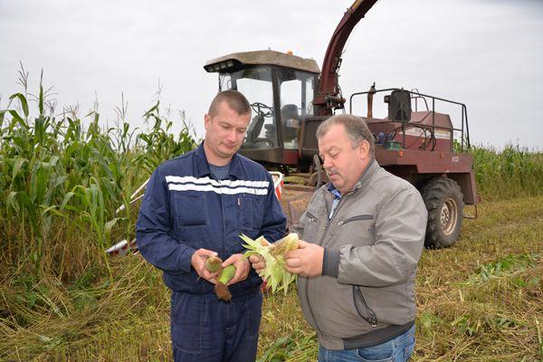 Механизатор Сергей Степанов Виктору Витвицкому: «Убирать такую кукурузу — одно удовольствие»