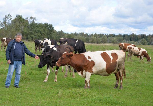 В хозяйстве Василия Рязанова — 66 коров, в ближайшее время их количество увеличится до 80