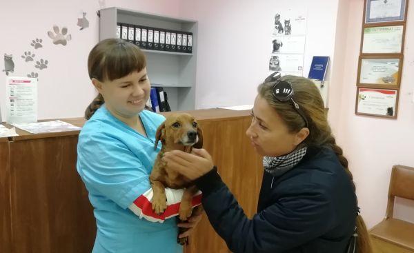 Врачи ветеринарной клиники и зоозащитники работают вместе