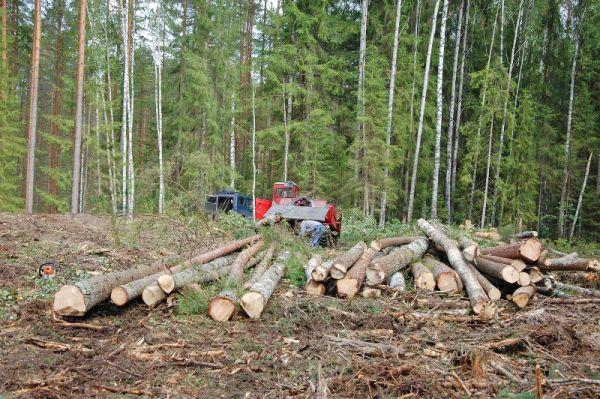В сравнении с аналогичным периодом прошлого года количество незаконных рубок сократилось на 25%, но произошло увеличение объёма незаконно заготовленной древесины и, соответственно, ущерба в 2,6 раза