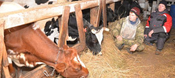 Братья Илья и Ярослав Корешковы на средства гранта своими силами строят новый скотный двор. Скоро их коровы переедут в просторное современное жильё