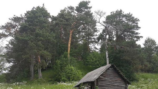 Есть в этих соснах тайна — своими корнями деревья тесно переплетены с прахом наших предков, их судьбой и давней историей