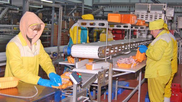 Крестецкая птицефабрика в год производит порядка 78 тысяч тонн мяса, примерно столько же получается птичьего помёта. Для его переработки в этом году будет построен завод, оборудование уже закуплено