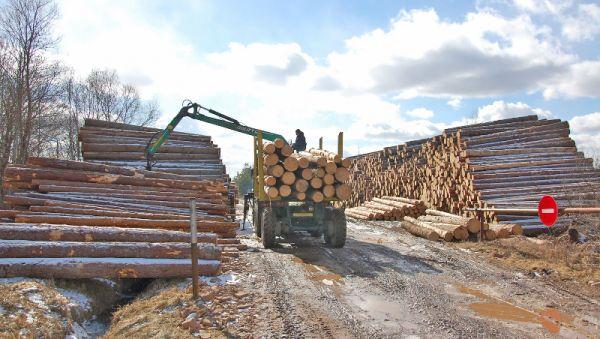 В прошлом году выручка от реализации леса возросла на 37 процентов
