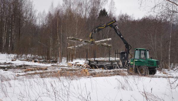 Лес с ветровала идёт на переработку