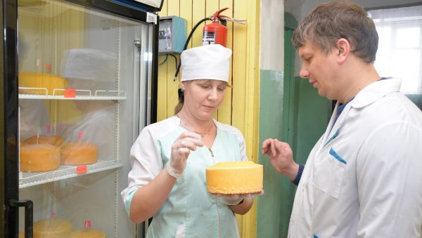 Виктор Корленков и Людмила Васильева анализируют последнюю партию сыра