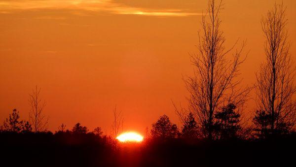 Закатное солнце над болотом