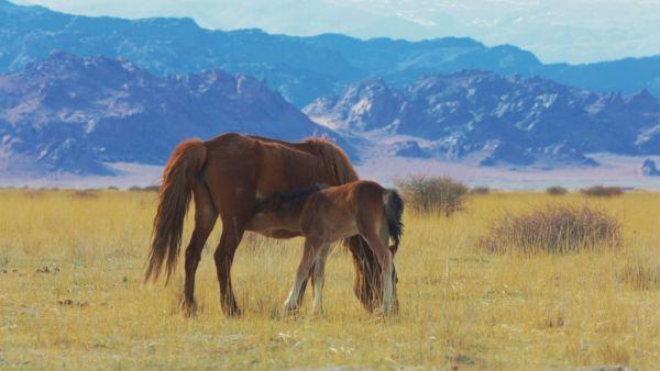 Монголия очень красивая и разная: степи, горы, пустыни, озёра, вулканы