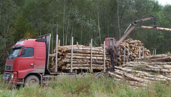 Важно не только заготовить древесину, но и выгодно её продать. В этом помогают электронные торги