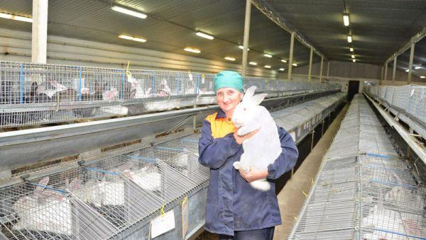 Хорошим хозяевам кролики приносят немалый доход