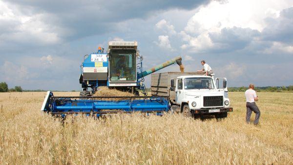 Поля, которые ещё недавно не обрабатывались, сейчас дают сельскохозяйственную продукцию