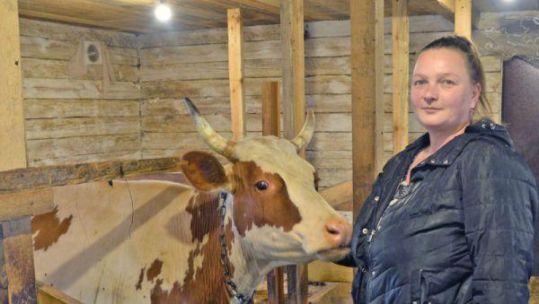 Елена Максимова: «Мои коровы дают много молока, но на всех желающих не хватает»