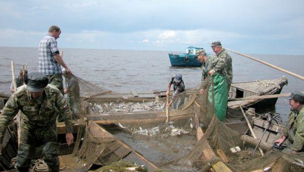Не все рыбаки готовы продавать товар сами, а посредничество сетевых магазинов приводит к торговым наценкам