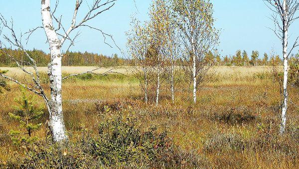 Разноцветное болото