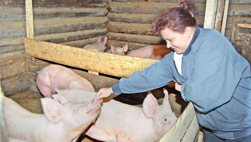 Теперь свиноводчество в области зависит от того, сумеют ли владельцы животных обезопасить их от африканской чумы