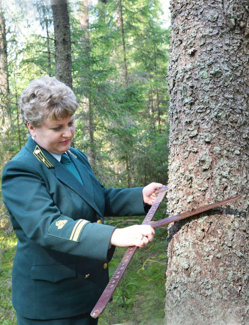 Сегодня у 60% лесного фонда области данные по лесоустройству просрочены.