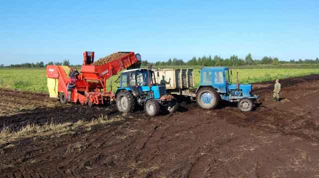 В этом году сельхозпредприятия и фермеры области соберут 95 тыс. тонн картофеля, что на 1 тыс. тонн больше уровня прошлого года.