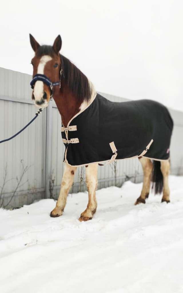 Лавка Евгении Широковой одевает не только наездников, но и их лошадок.