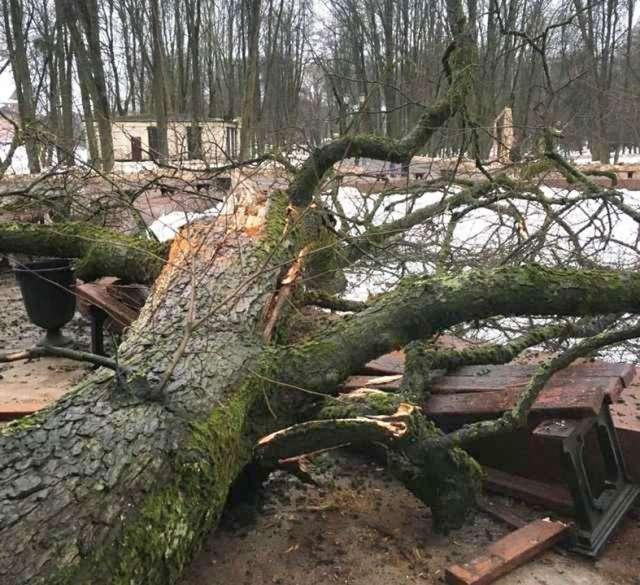 Старых деревьев в Кремлёвском парке немало. Насколько крепко они держатся в земле, может выявить только специальное обследование.