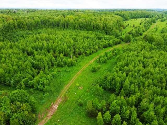 Зелёный щит — это природный каркас города, в который входят леса, реки, береговые линии, озёра и пруды. Он создаётся для того, чтобы укрепить экологию и защитить её от негативного воздействия.