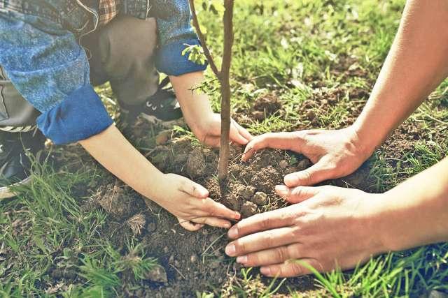 Члены школьного лесничества скоро начнут готовить дендрарий к сезону.