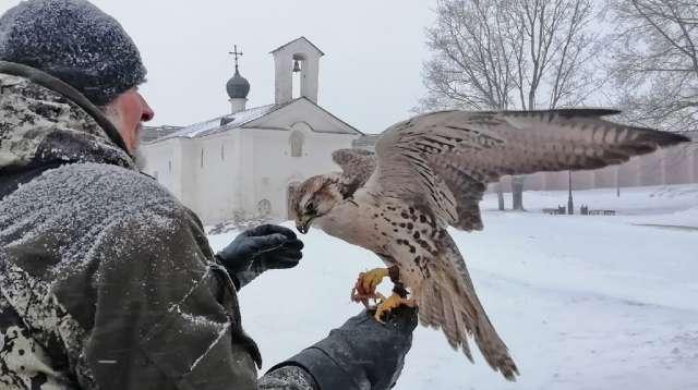 По мнению Владимира Михайлова, главное для удачной охоты — найти с соколом взаимопонимание.