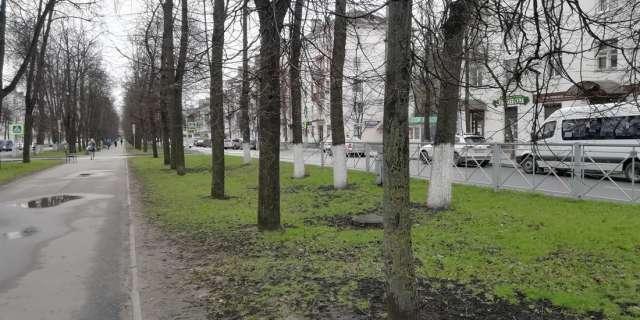 Побелка деревьев известью в смеси с медным купоросом не лишена смысла.