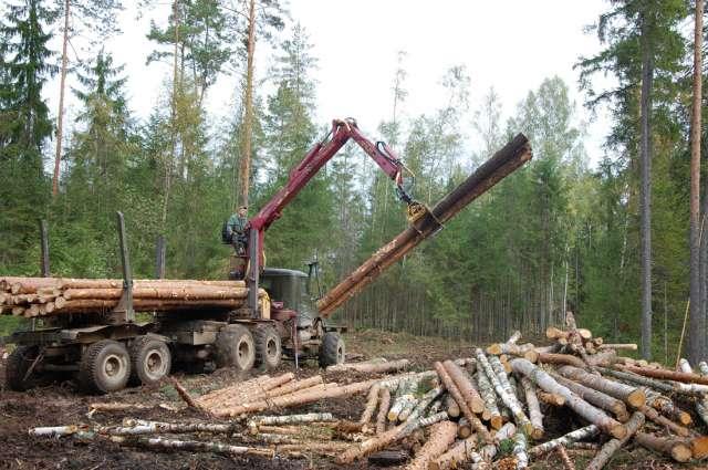 От лесоустройства зависят и разработка делянок, и лесо-восстановление.