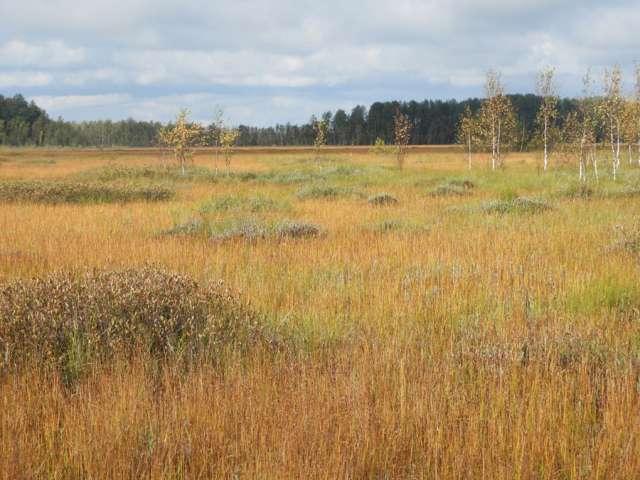 Осеннее болото всегда поражает богатством красок.