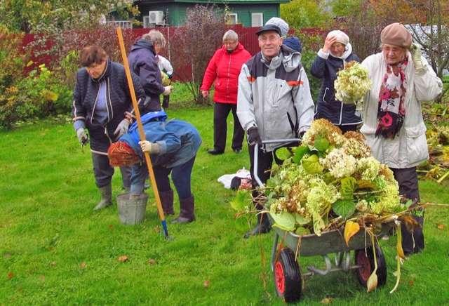 Серебряные волонтёры помогают в благоустройстве сиреневого сада в Великом Новгороде.