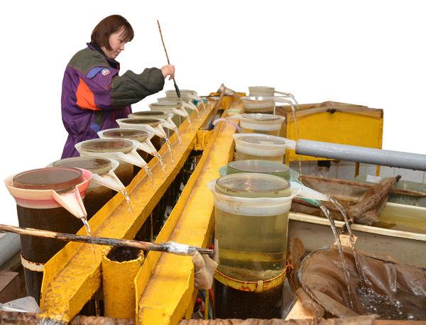 В таких колбах из икры появляются личинки, которые затем проходят длинный путь, прежде чем вырасти до товарной рыбы