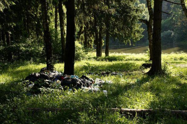 Нелегалы могут вывозить мусор не на полигон, а в лес