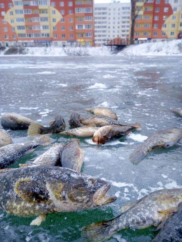 Сейчас любители зимней рыбалки проводят на пруду очень много времени