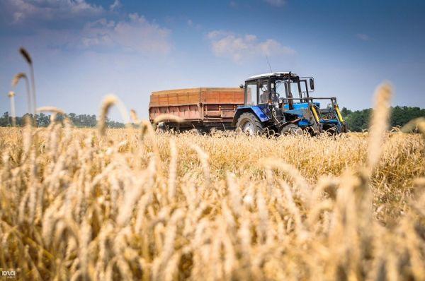 Средства будут выделять на реализацию федерального проекта «Создание системы поддержки фермеров и развитие сельской кооперации».