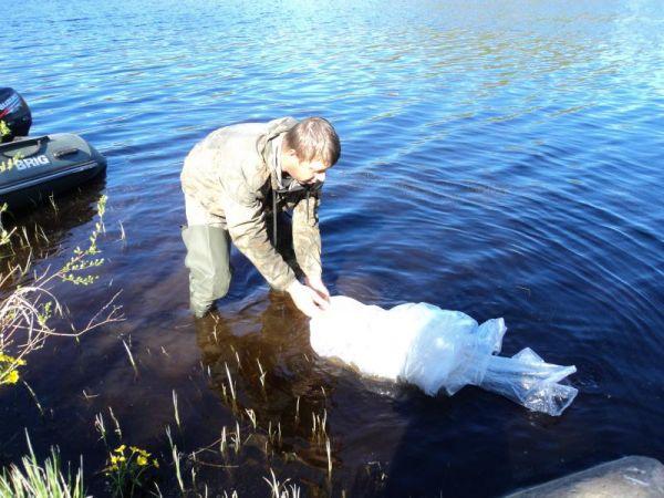 В Окуловском районе идет зарыбление озера Льняное