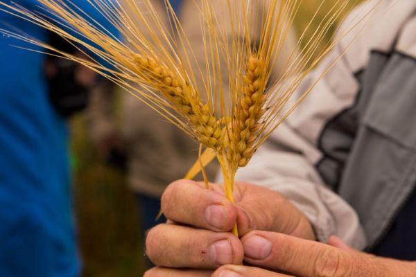 19-21 июня министерство сельского хозяйства Новгородской области будет принимать документы на конкурс грантов от начинающих фермеров, семейных животноводческих ферм и сельскохозяйственных кооперативов.