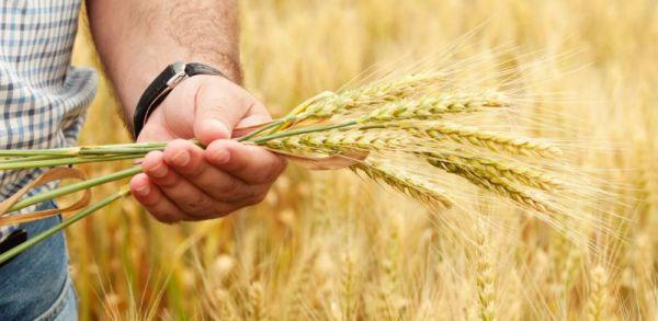 В 2019 году в областной программе развития АПК предусмотрено более 100 млн рублей на грантовую поддержку начинающих фермеров, семейных животноводческих ферм и сельхозкооперативов.