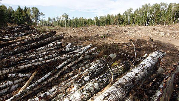 Рослесхоз в ходе проверки исполнения лесного законодательства в Новгородской области выявил факты многочисленных нарушений.