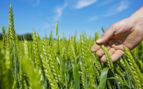 Бизнес-проекты на конкурс «Агростартап» подготовили аграрии из Батецкого, Боровичского, Любытинского, Парфинского, Старорусского и Мошенского районов.