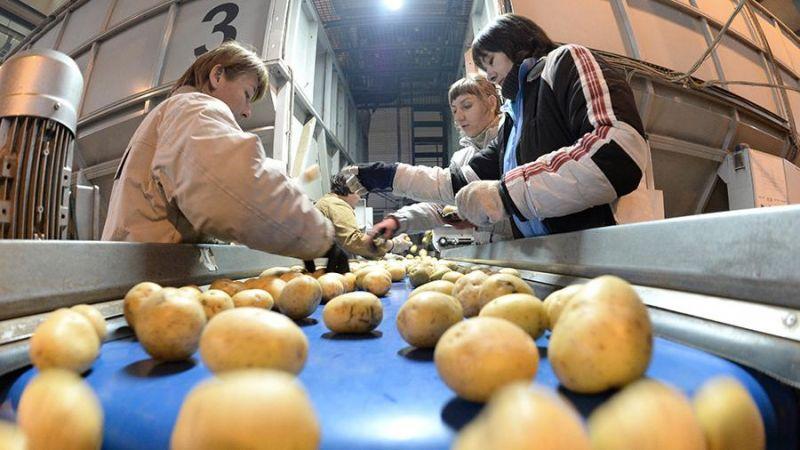Команда планирует экспериментировать с различными добавками, чтобы упаковка из овощей получалась прочной