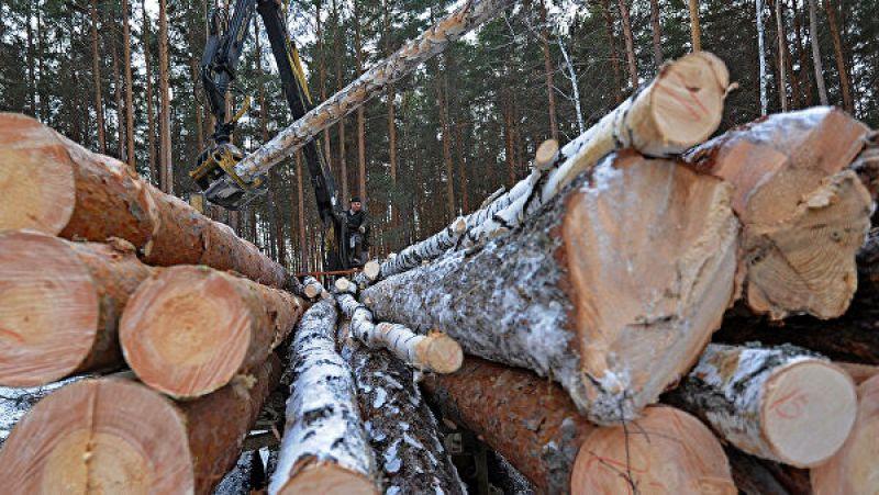 Средняя цена кубометра древесины благодаря использованию электронных торгов выросла с 560 рублей до 850 рублей в 2018 году и до 920 рублей в 2019-м.