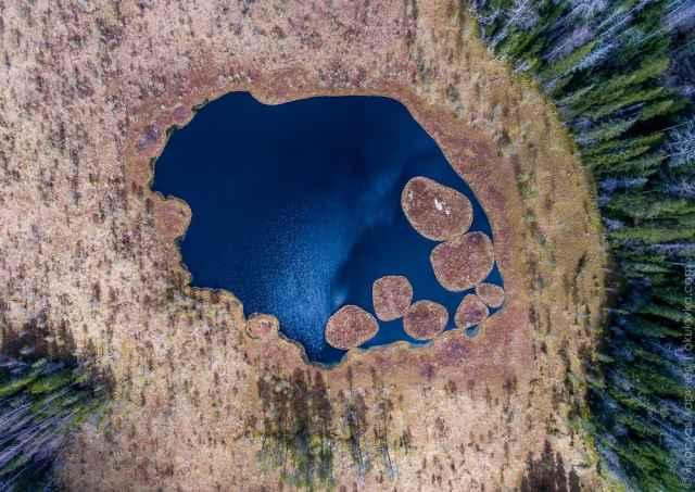 На озере образовались травяные островки.