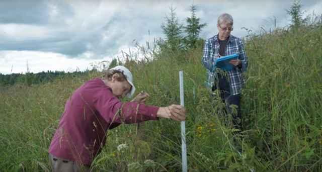 Коронавирус не помешал ботаникам и почвоведам провести исследования в национальном парке «Валдайский».
