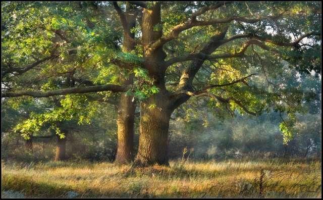 Всего в Новгородской области функционирует 131 особо охраняемая природная территория