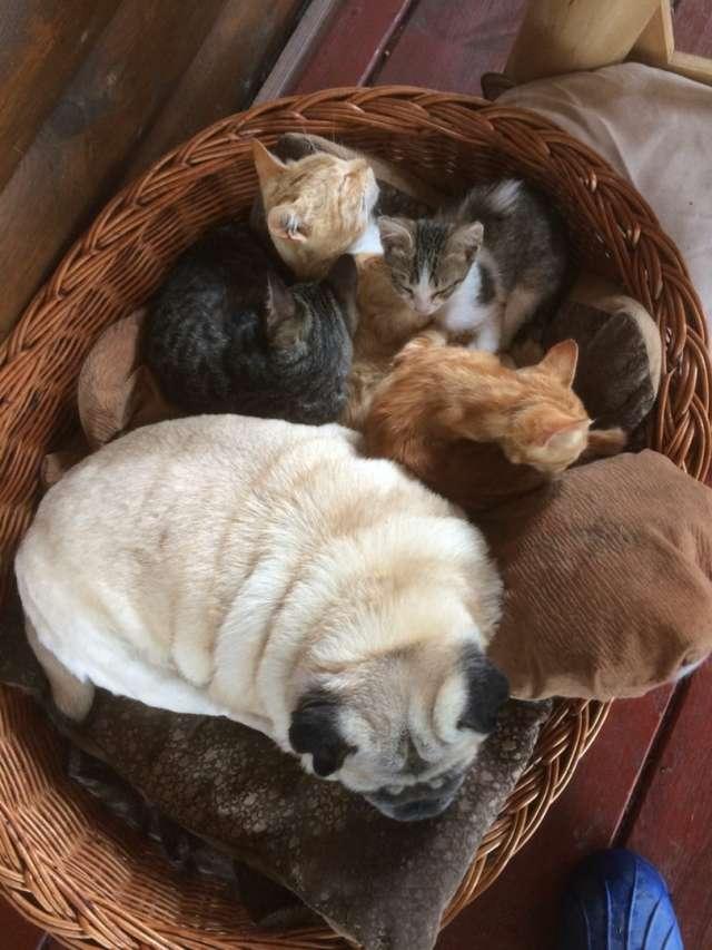 Помимо других животных, в новых хозяевах нуждаются 15 кошек, живущих в подворье Масарских