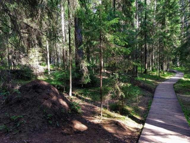 Администрация Боровичского района заинтересована в развитии экологического туризма