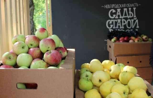 Компания «Сады Старой Руссы» начала деятельность в 2010 году. В садах выращивали около 45 сортов яблонь.