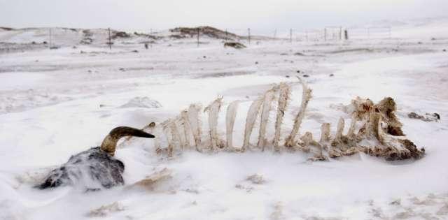 В Новгородской летописи дважды упоминаются голодные годы из-за весенних заморозков — в 1215-1216 году и в 1228-1230 годах