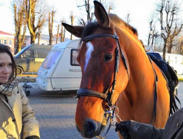 В роли коня Фомы участкового Ильи Чугунова в драматическом детективе «Чингачгук» снимается конь Запад из Санкт-Петербурга.