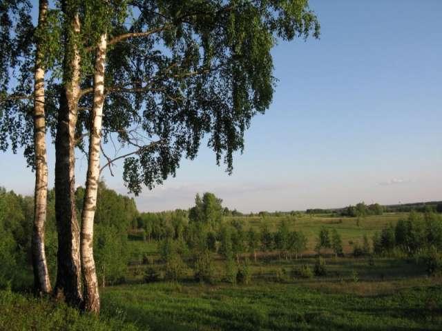 Ежегодно 5 июня отмечается Всемирный день охраны окружающей среды и российский День эколога.